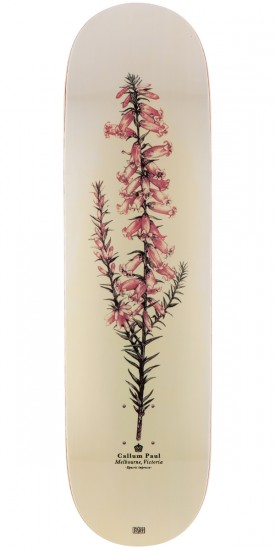 Passport Callum Paul Pink Heather Skateboard Deck - 8.5""