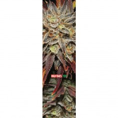 Mob X High Times Blackberry Kush Grip Tape