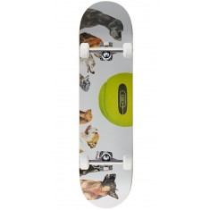 CCS Ball Is Life Skateboard Complete